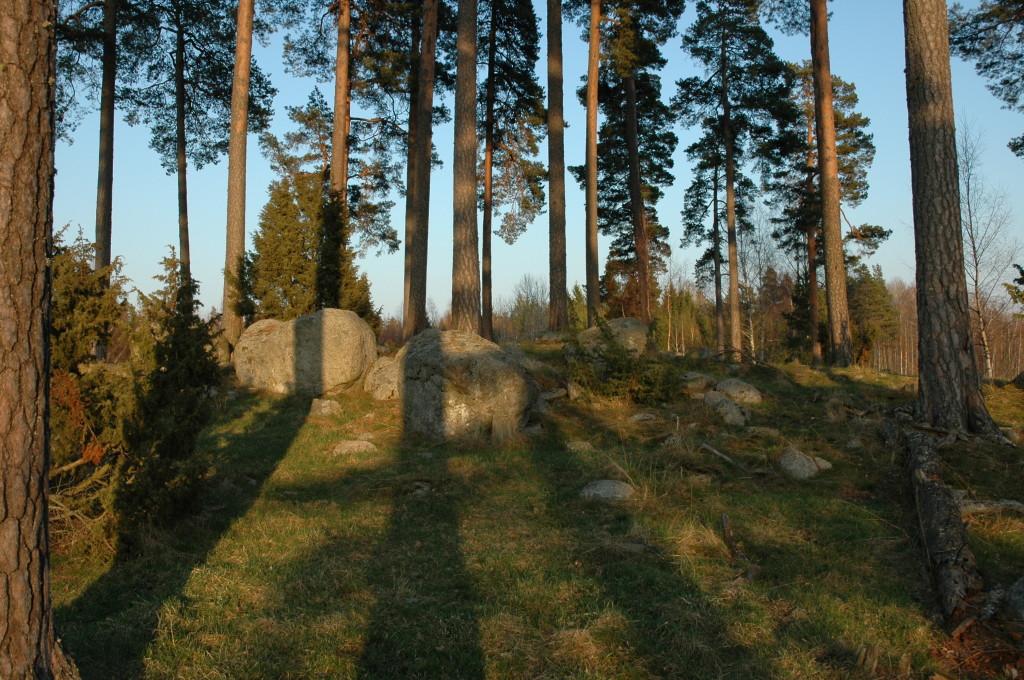 Tallbiotop vid Gatstugan. 28/4-2005.  Foto: Tom Sävström