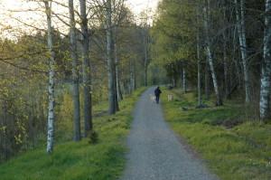 Svenskbyskogen, en viktig tätortsnära rekreationsskog med höga naturvärden. 14/5 2005. Foto: Tom Sävström