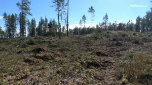 Trappberget mot syd. 6/4 2014 Foto: Lars Bsenko
