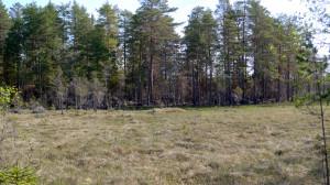 Avståndsbild på västra naturvårdsbrännan Rövallsmossen SO. 18/5 2014. Foto: Lars Bsenko
