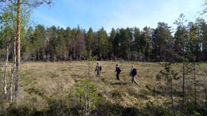 Tre raska män på mossen på väg till västra naturvårdsbrännan.  Rövallsmossen SO 18/5 2014. Foto: Lars Bsenko