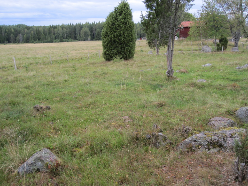 Fältgentianans växtplats i Muren, Ramnäs, 16/8 2014. Foto: Tom Sävström