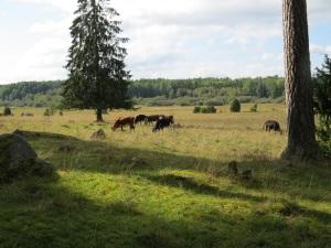Vackert beteslandskap med höga naturvärden, Gatstugan/Magsjömaden, 10/9 2014. Foto: Tom Sävström