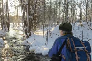 Strömstarens vintermiljö i Usträngsbobäcken, 23/1 2015. Foto: Tom Sävström