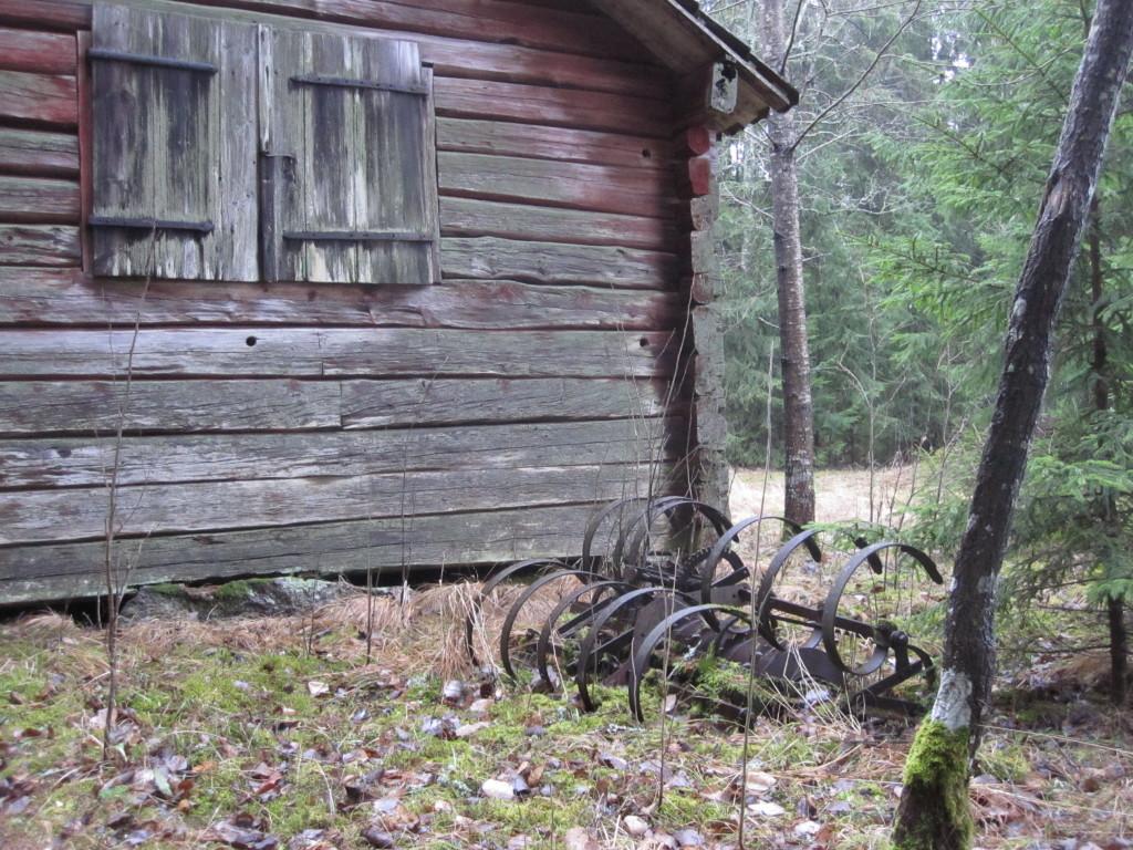 De nedre stockarna på timmerlogen utgör växtsubstrat för grå nållav. Björkkärret, 7/1 2014. Foto: Tom Sävström