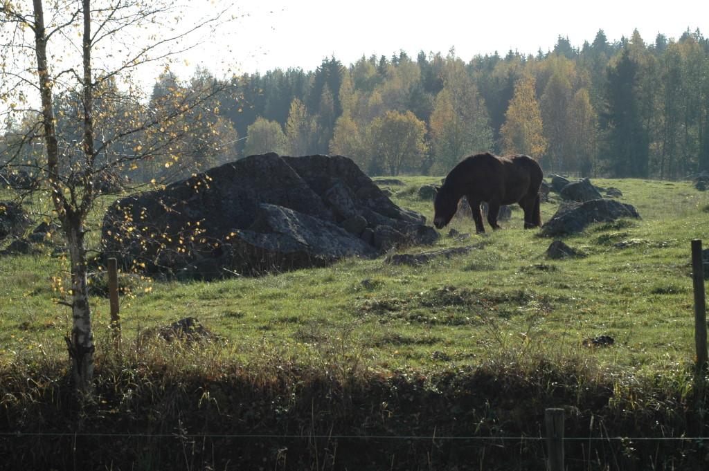 Elingbos steniga betesbackar har höga natur- och kulturvärden. 15/10 2006. Foto: Tom Sävström
