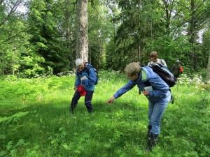Entusiastiska blomstervänner i hage vid Jobsbo, 14/6 2015. Foto: Tom Sävström
