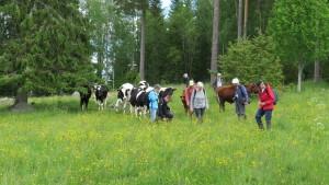 I betesmarken vid Gatstugan fick vi i gräskursen trevligt sällskap. 27/6 2015. Foto: Tom Sävström